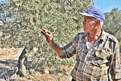 Abu Majdi