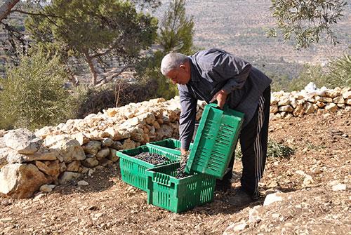 Odeh Khaseeb